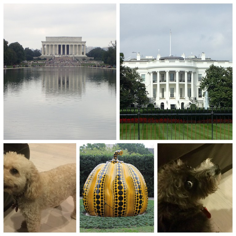 Washington Collage