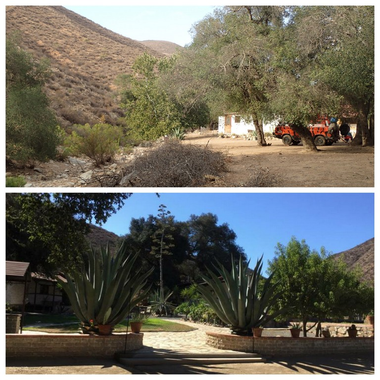 Collage ranch agave